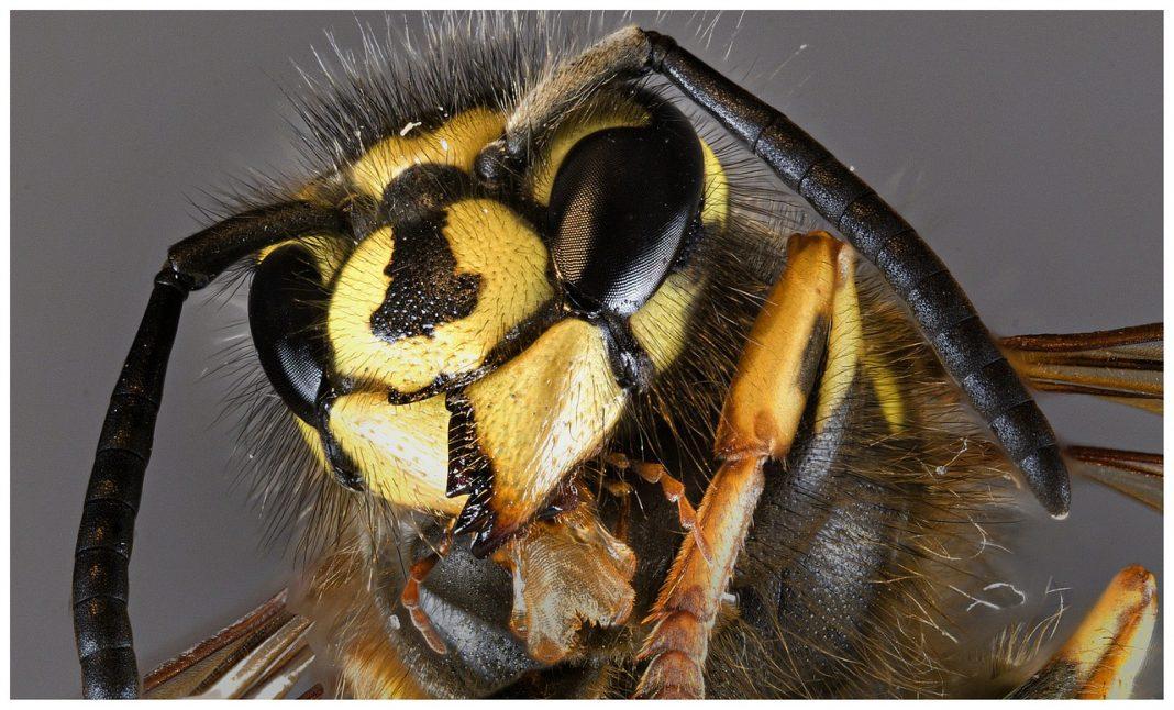 piqûre d'insecte